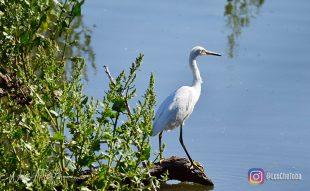 Avistaje de aves en Mar Chiquita + Salida embarcada 3