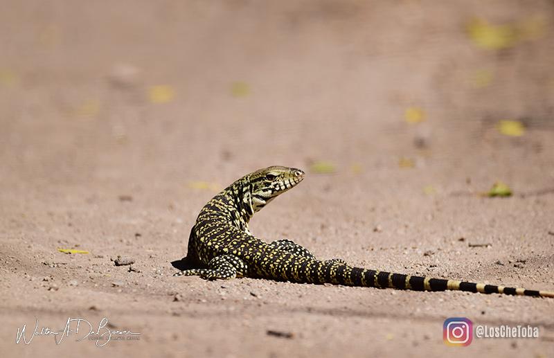 Safaris fotográficos y observación de aves 5