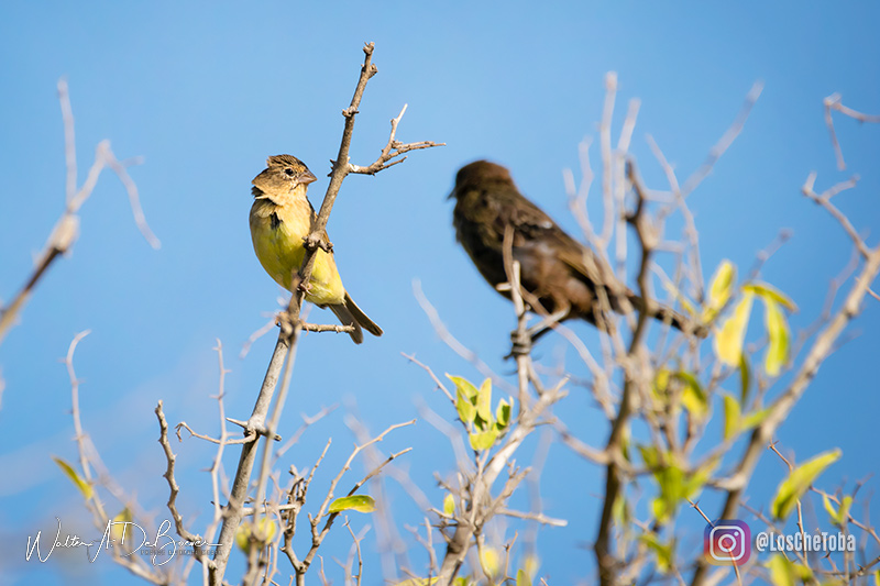 Misto, fotografía de aves en Córdoba