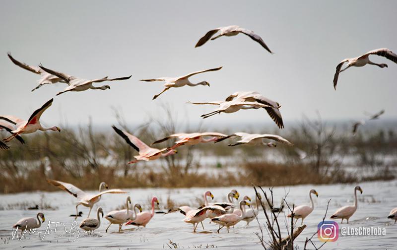 Avistamiento de Flamencos en laguna de Mar Chiquita