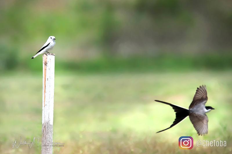 Aves del centro del país