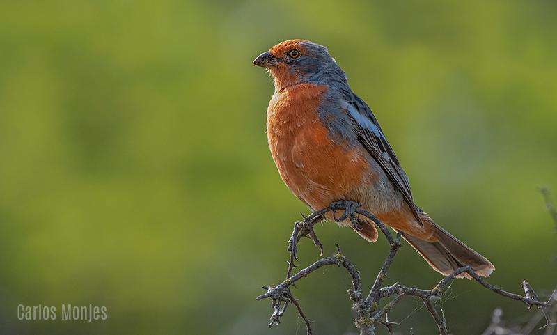 aves de villa maria