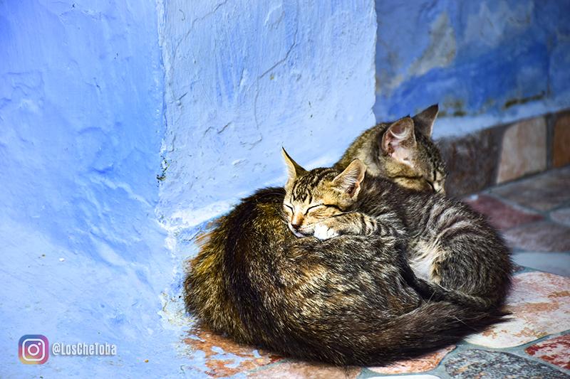 Por qué hay tantos gatos en Marruecos
