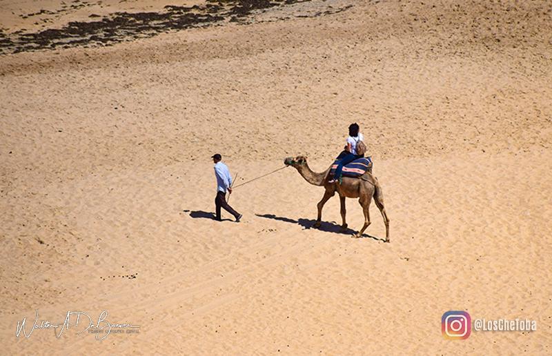 paseo en camello marruecos