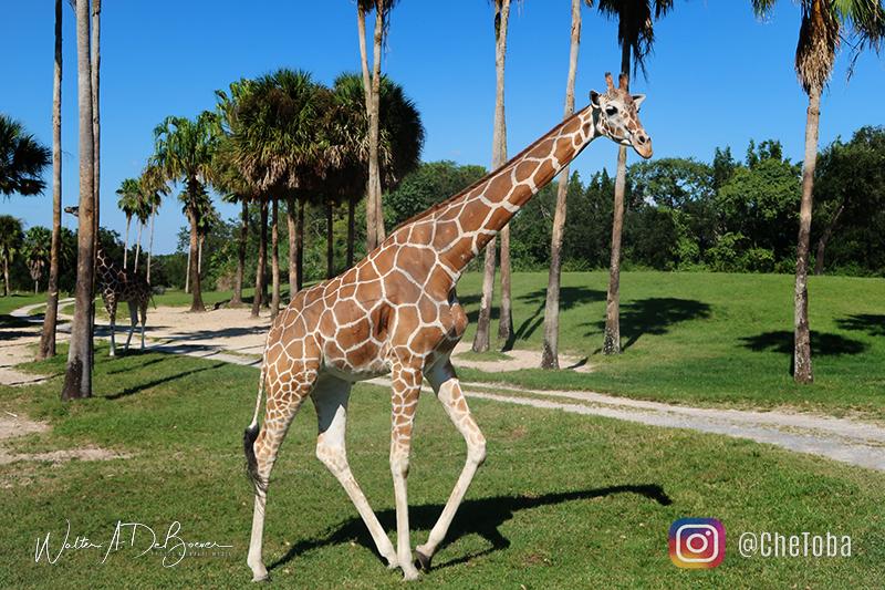 Animales en Busch Gardens