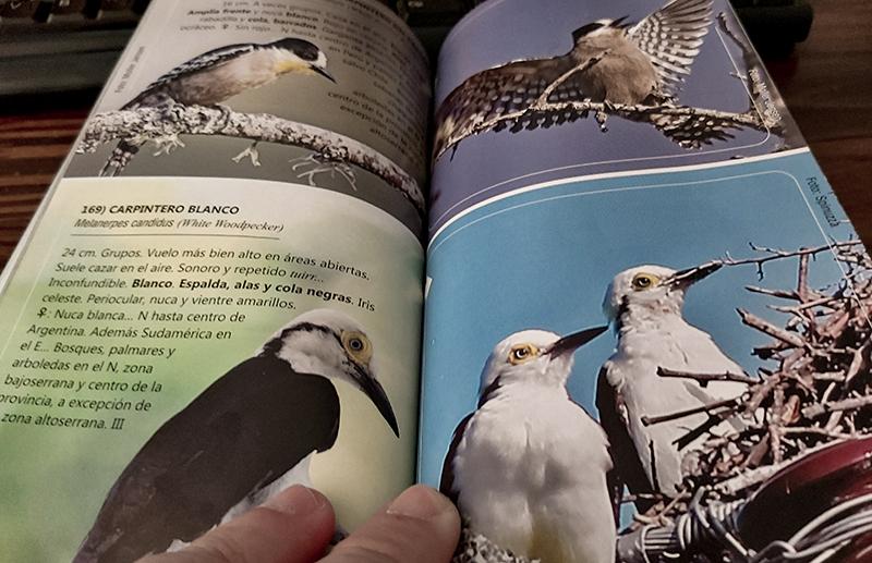 Libro aves de córdoba