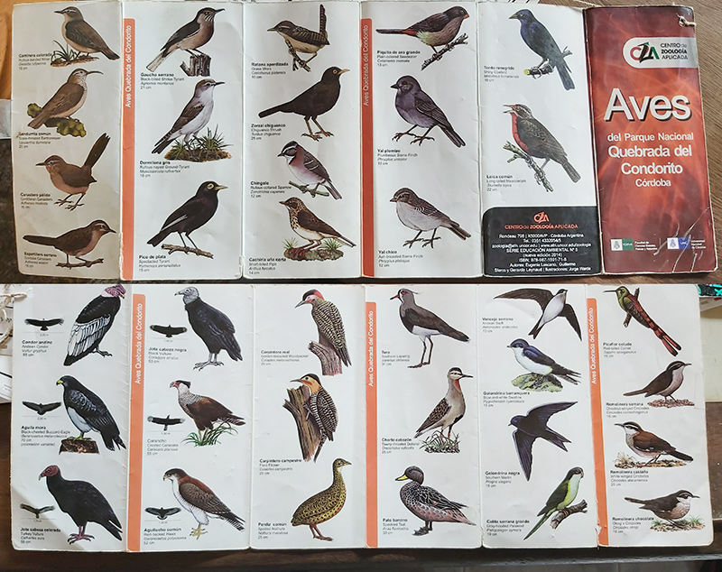 Aves comunes de la Quebrada del Condorito