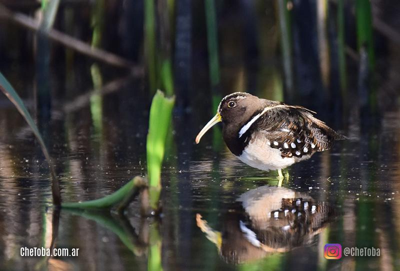 Observación de Aves en Córdoba