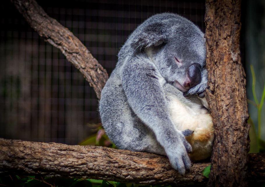 Ayuda para Australia de SeaWorld & Busch Gardens