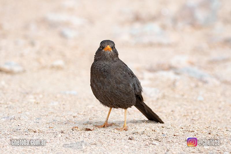 Mis primeras fotos de aves de Córdoba