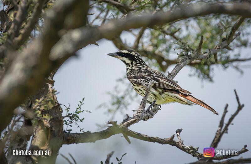 Avistaje de aves en Córdoba