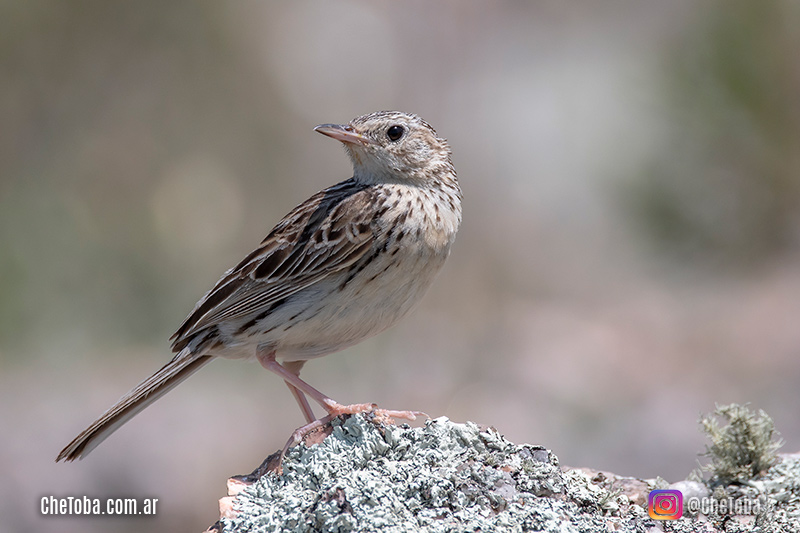 Birdwatching Nikin D7500