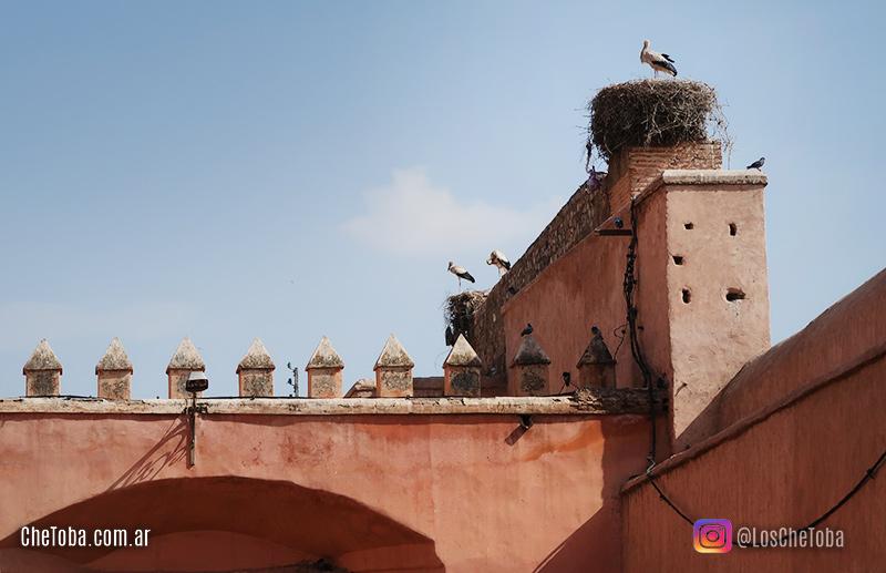 Cigüeñas en Marruecos