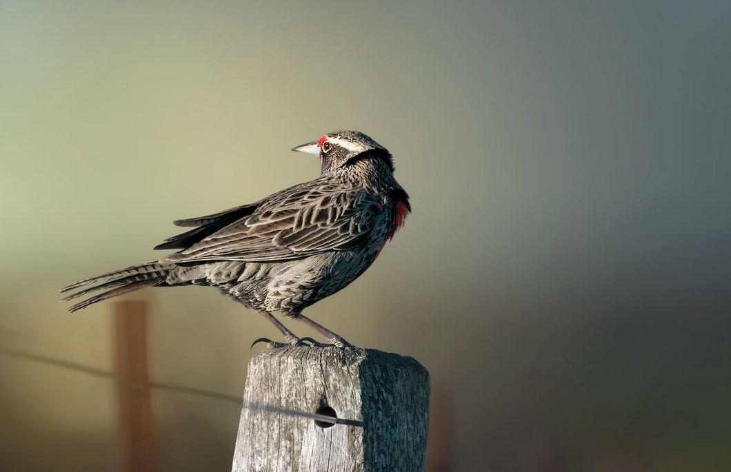 Documentales de pájaros en Netflix
