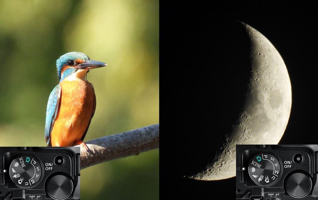 Cámara de fotos para la fotografía de aves