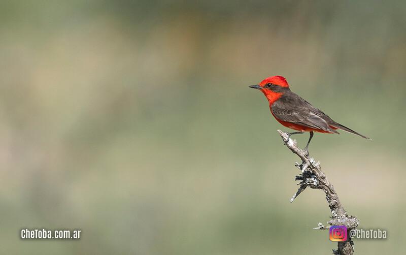Avistaje de aves, el turismo que se viene?
