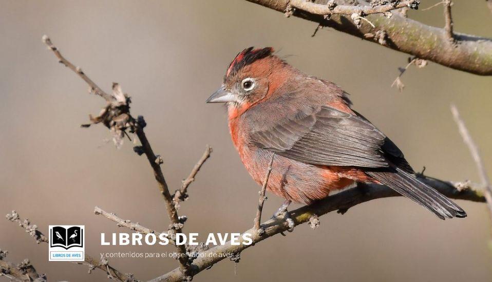 Libros de Aves