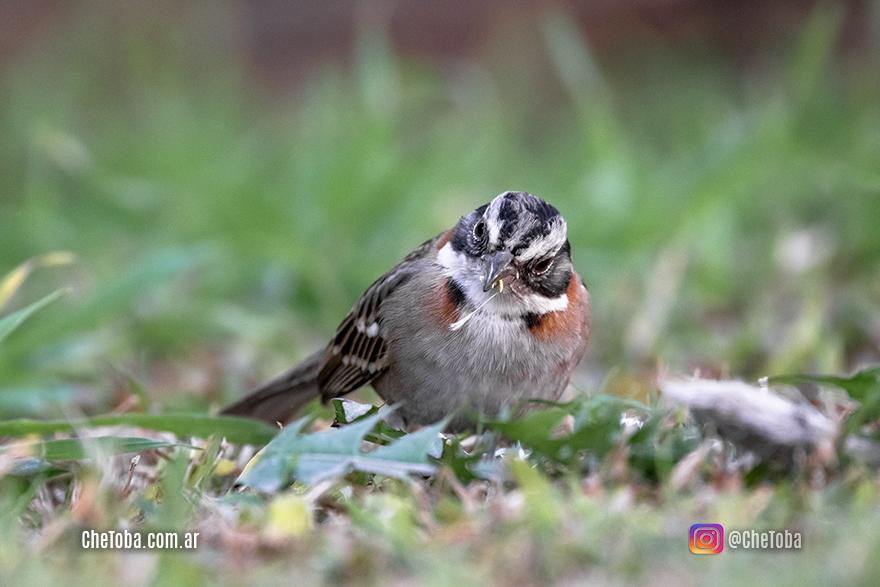 Tips para mejorar tus fotografías de aves