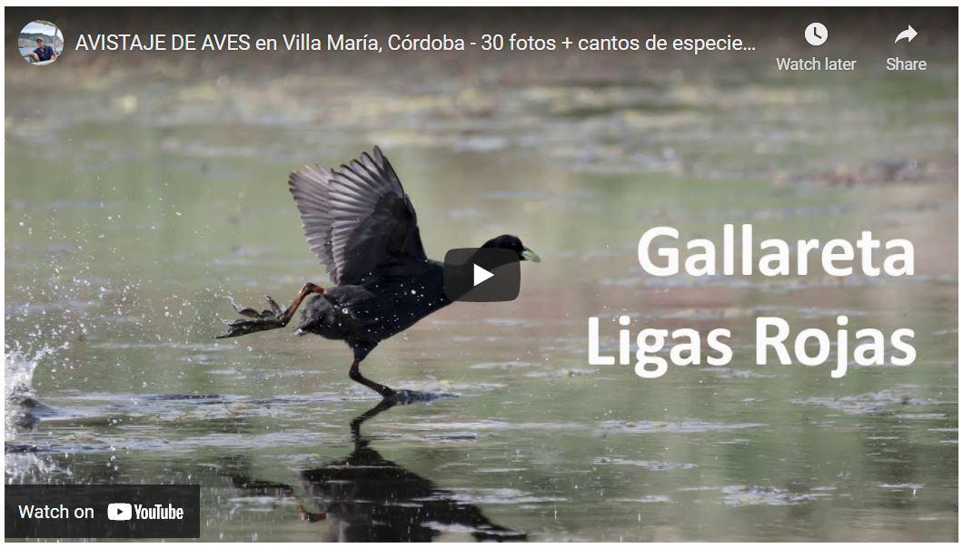 Aves de Villa María