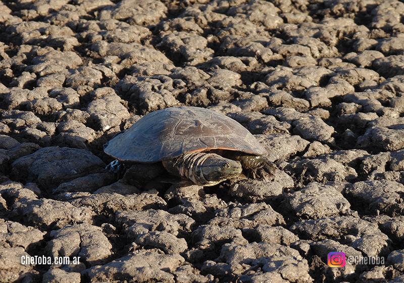 Salvamos a una tortuga?