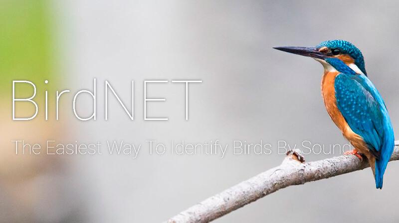 BirdNet el Shazam de los pájaros