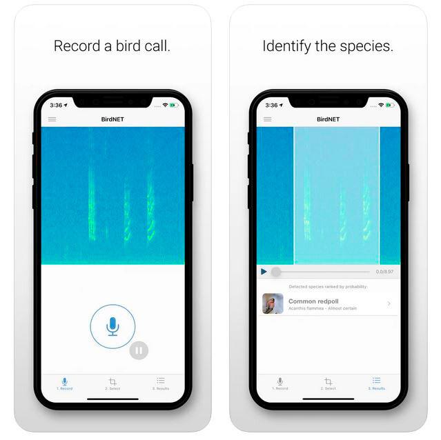 App para identificar aves por su canto