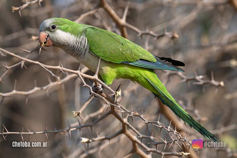 Las aves más vistas en Argentina