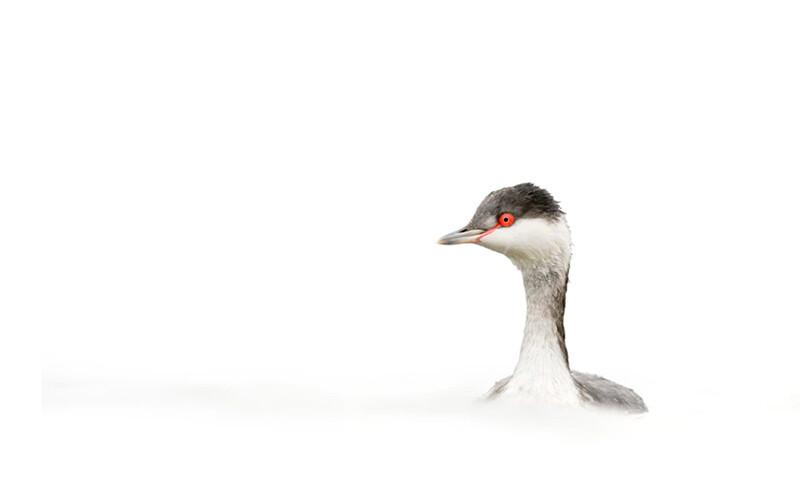 Fotos de aves en clave alta