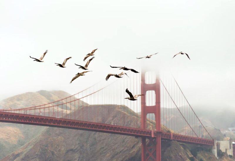 Aves en San Francisco, California