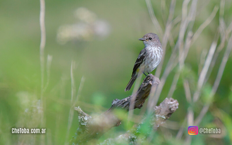 Fotógrafos de naturaleza