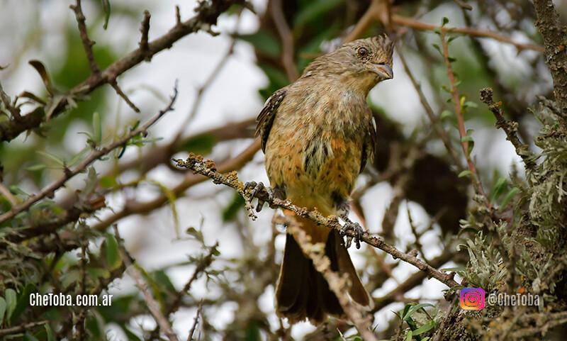 Aves del monte cordobés