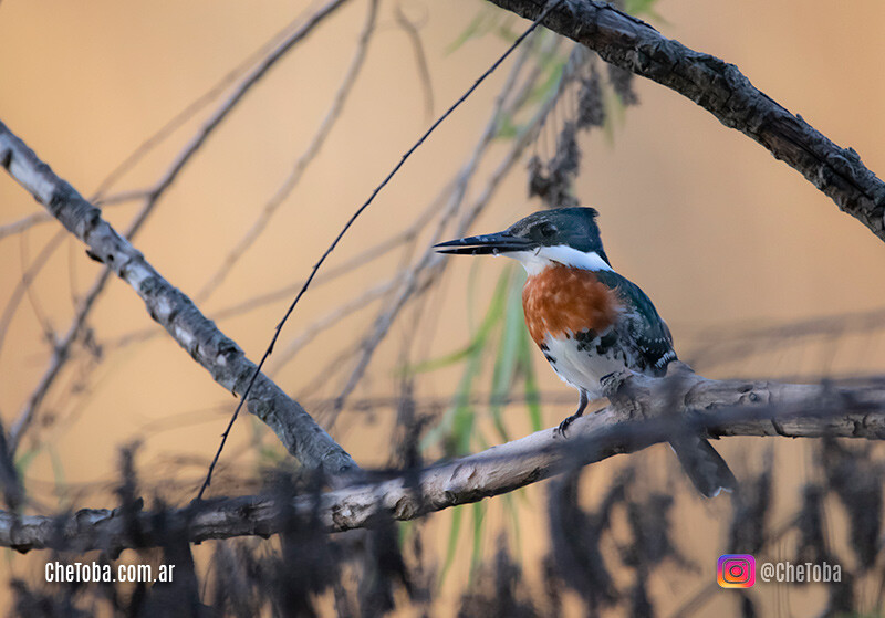 Aves de Villa Nueva Córdoba