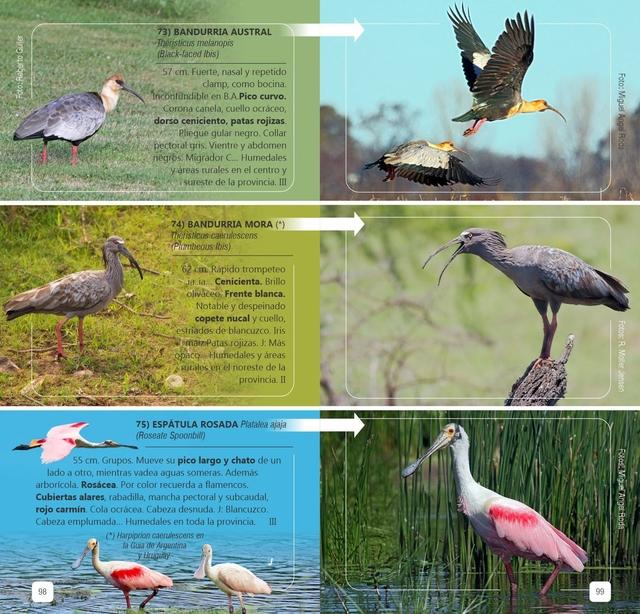 Guía de Campo Aves de Bs As