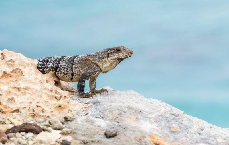 Parque Garrafón Isla Mujeres, un tesoro en el mar