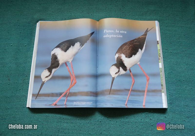 Las patas de las aves