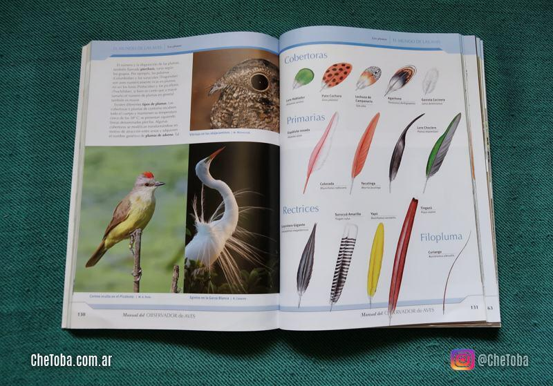 Tipos de plumas de las aves
