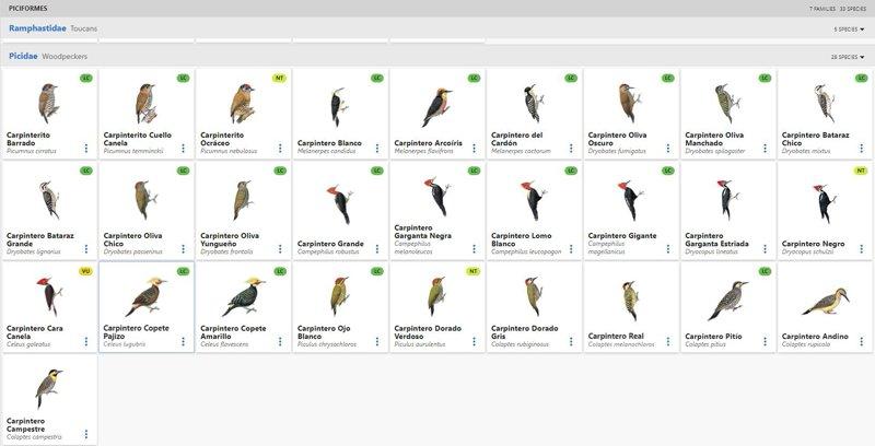 Carpinteros, los pájaros que no son pájaros