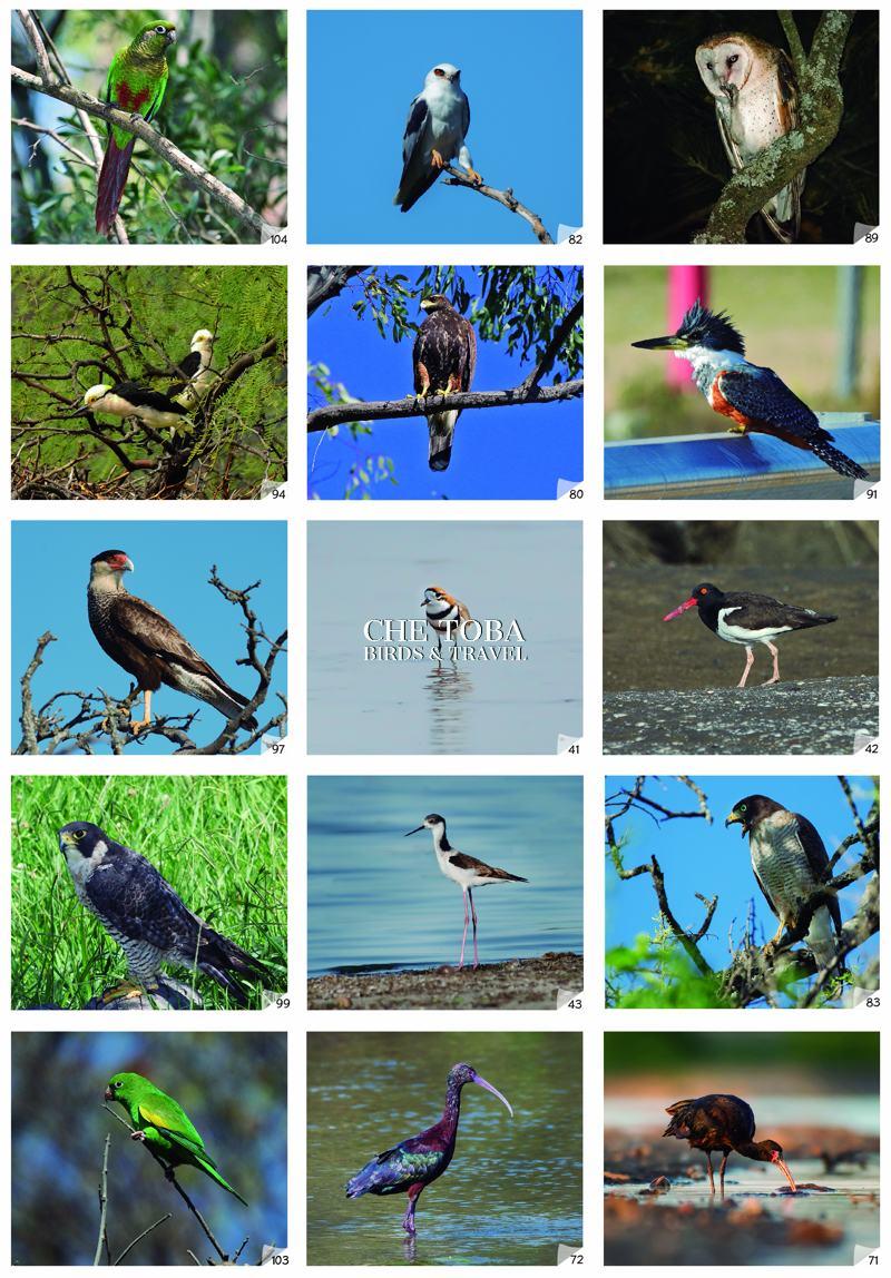 Aves de la Provincia de Buenos Aires