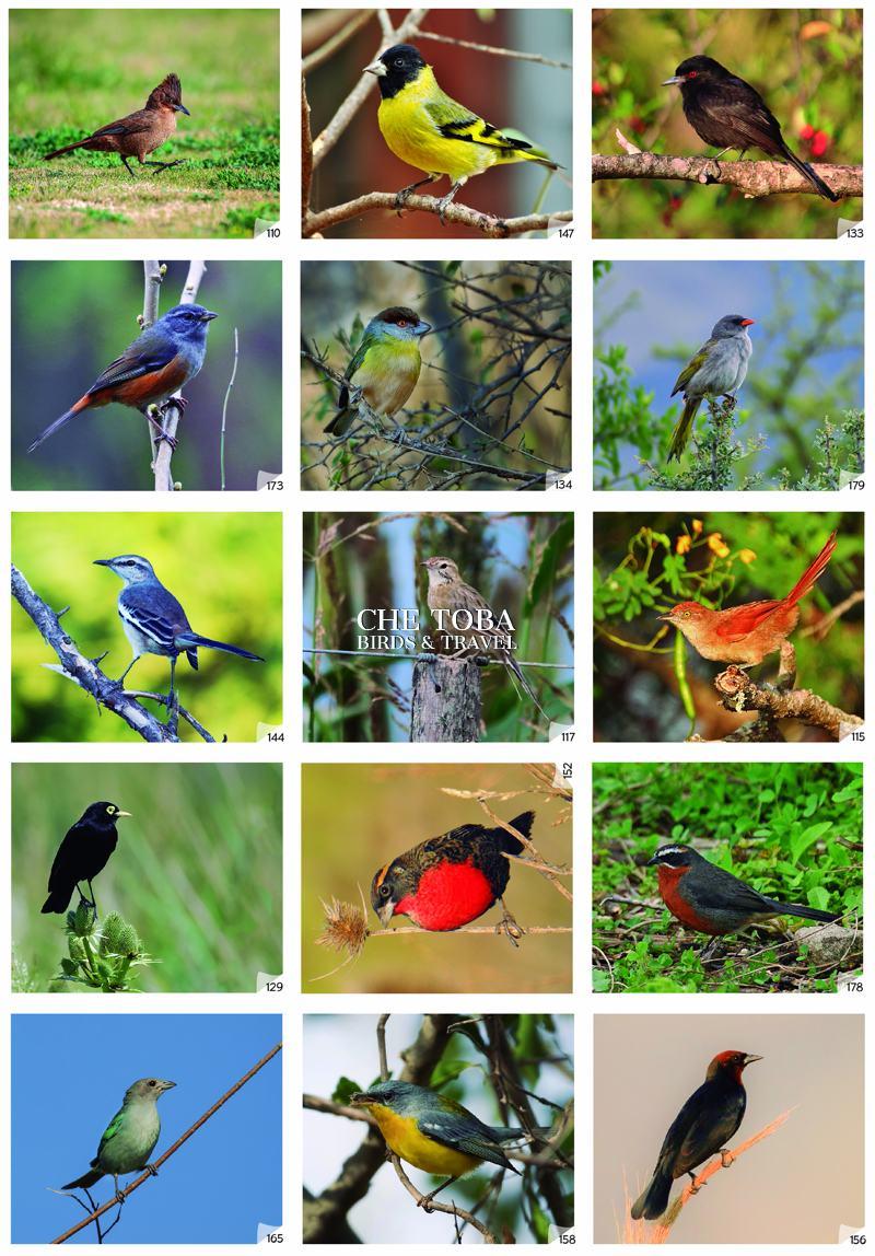 Figuritas Aves de Buenos Aires