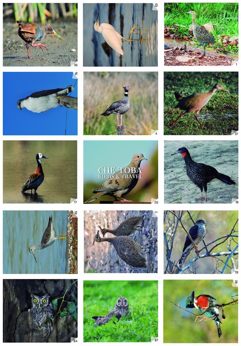 Figuritas de Aves Ecoval Ediciones