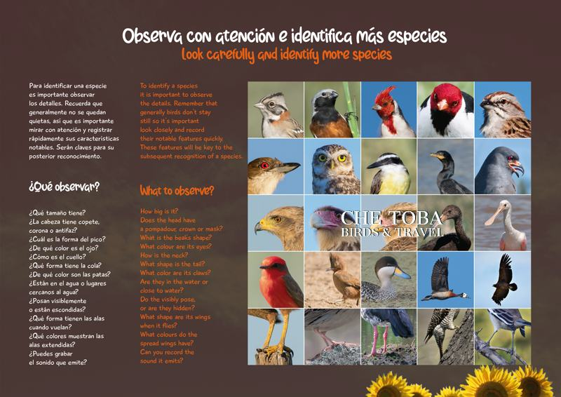 Libro Figuritas de Aves de Buenos Aires