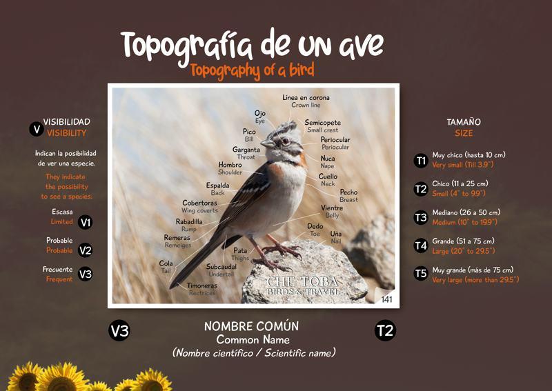 Topografía de un ave