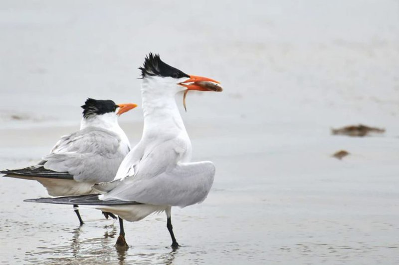 Rutas migratorias de las aves