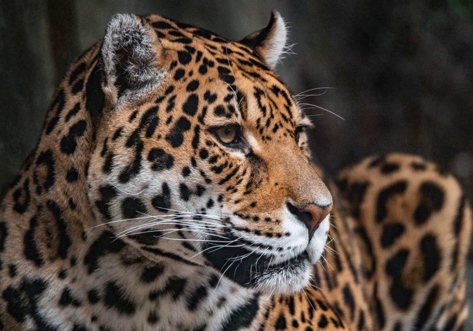 33 Mamíferos de la Argentina en peligro de extinción