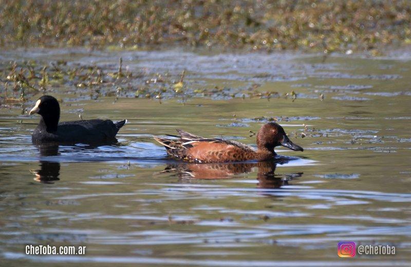 Algunas aves acuáticas recorriendo caminos rurales