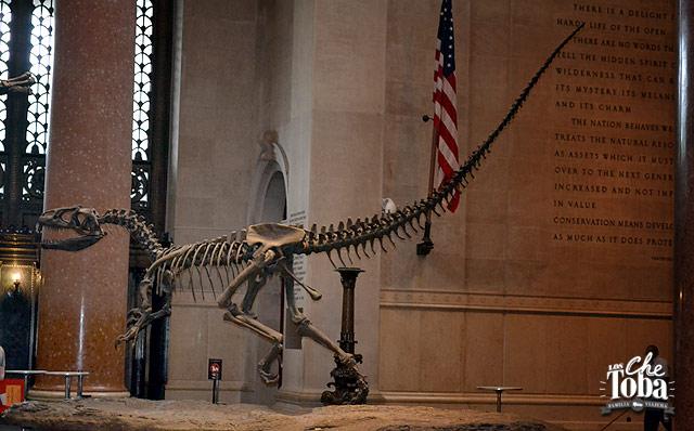 22-donosaurio-museo-historia-n