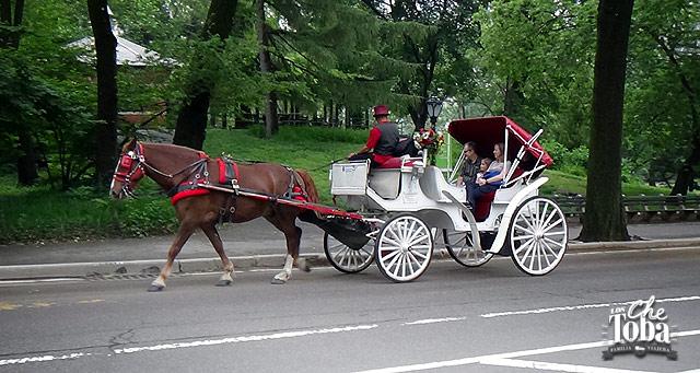 25-carruajes-central-park-nyc