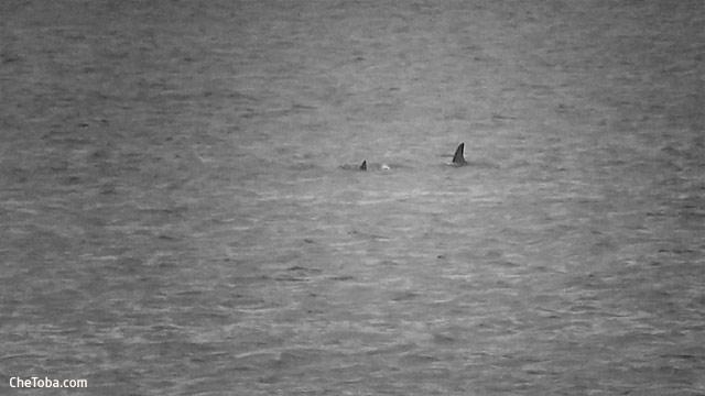 Delfines Río San Agustín Florida