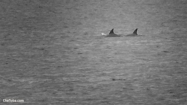 Delfines Río Matanza San Agustín