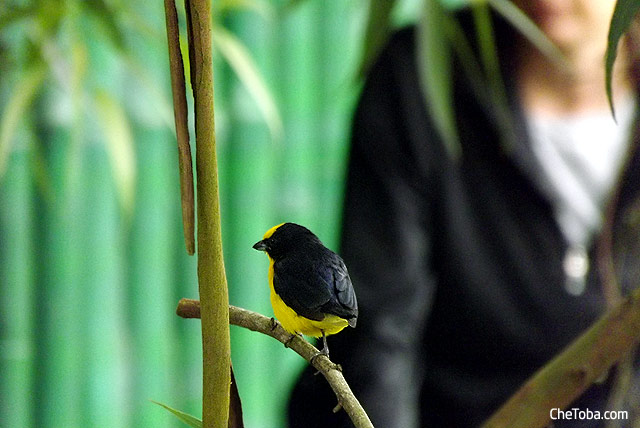 Birdwatching Colombia